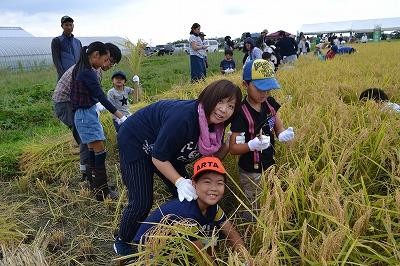ご家族で楽しく稲刈り体験