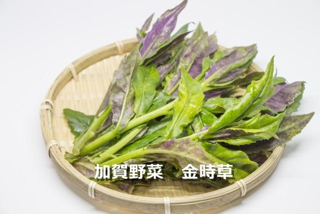 加賀野菜 「金時草」 は栄養たっぷり